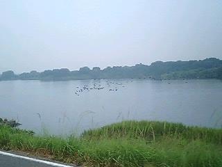 川を下る鳥の集団