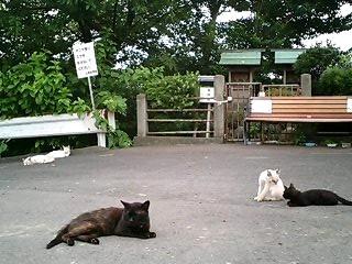 河川敷の猫ちゃん